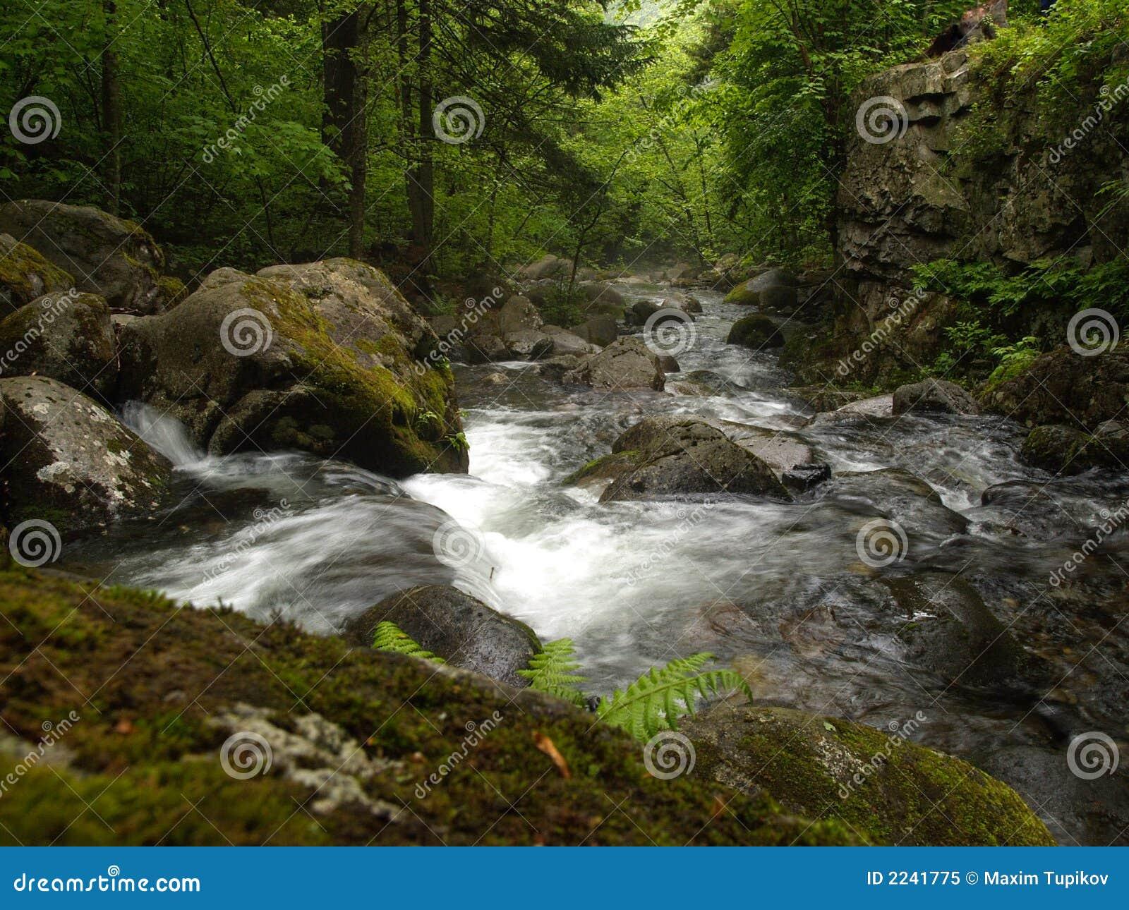 Jesień lasów creek góry