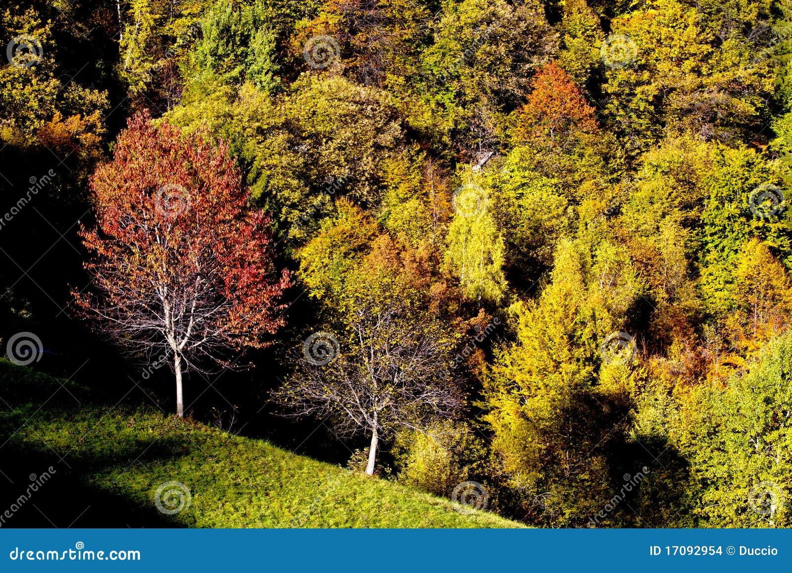 Jesień las