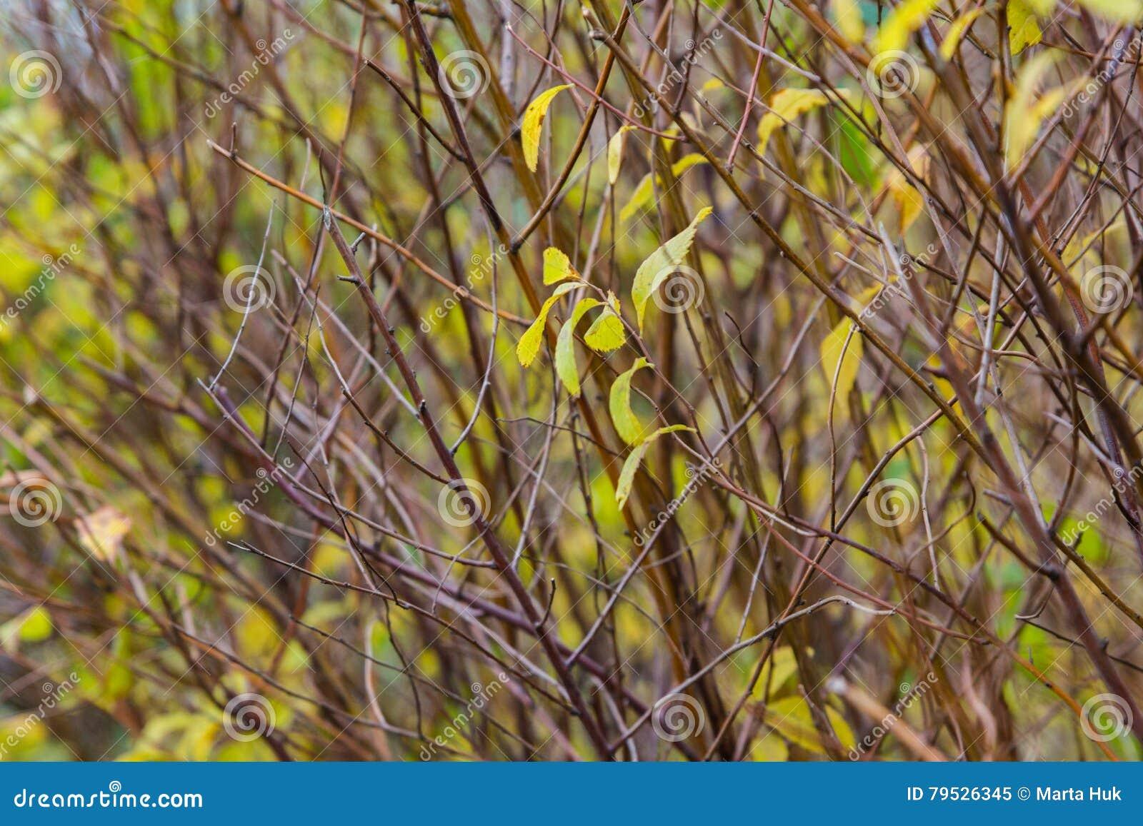 Jesień las opuszczać kolor żółty
