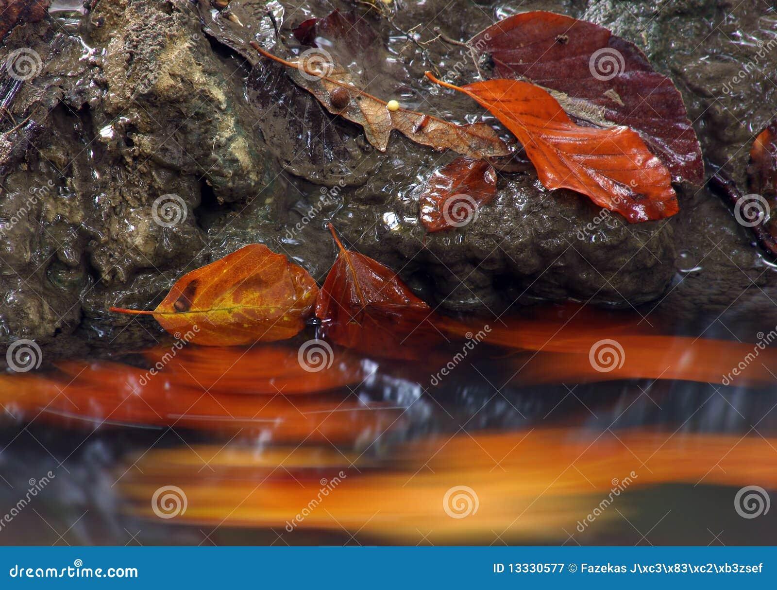 Jesień liść czerwony strumień
