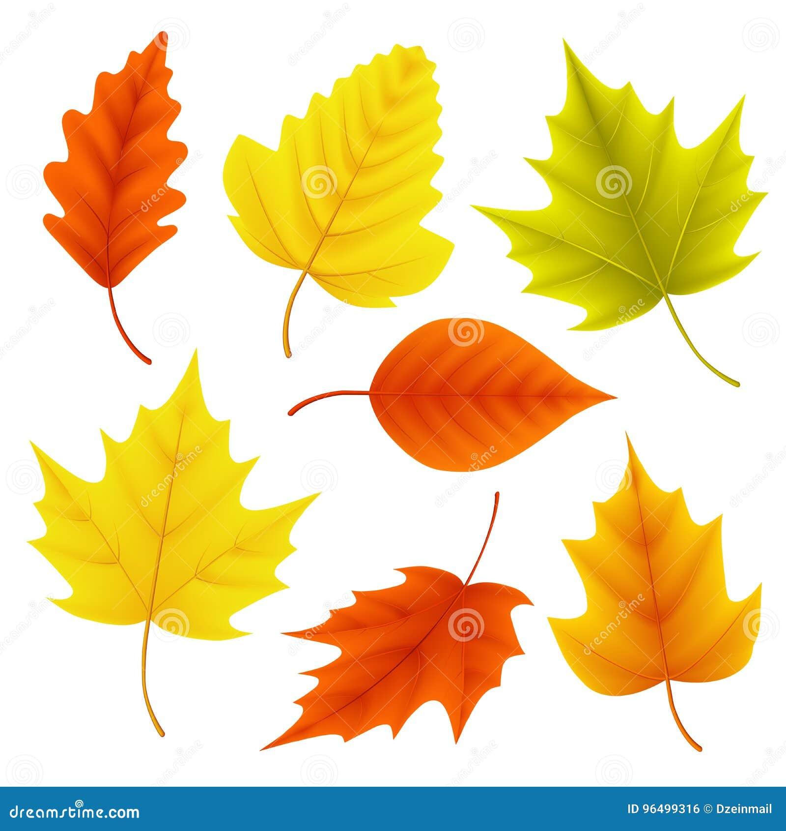 Jesień liści wektorowy ustawiający dla spadków sezonowych elementów z klonowym i dębowym liściem