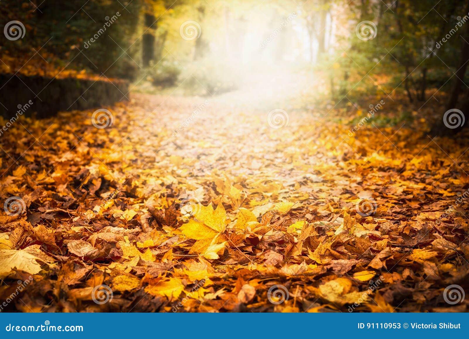 Jesień liścia ściółka w ogródzie lub parku, spada plenerowy natury tło z kolorowymi spadać liśćmi