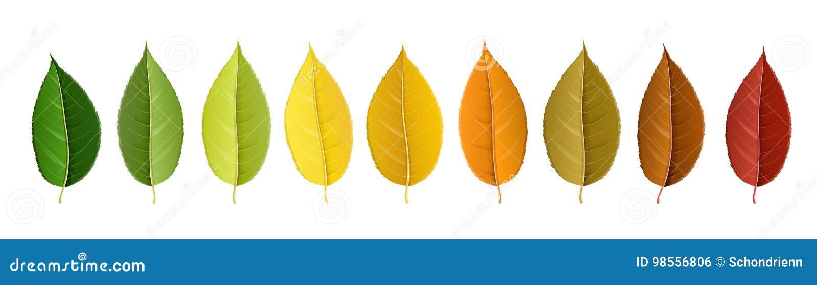 Jesień liścia kolorowa paleta w rzędzie