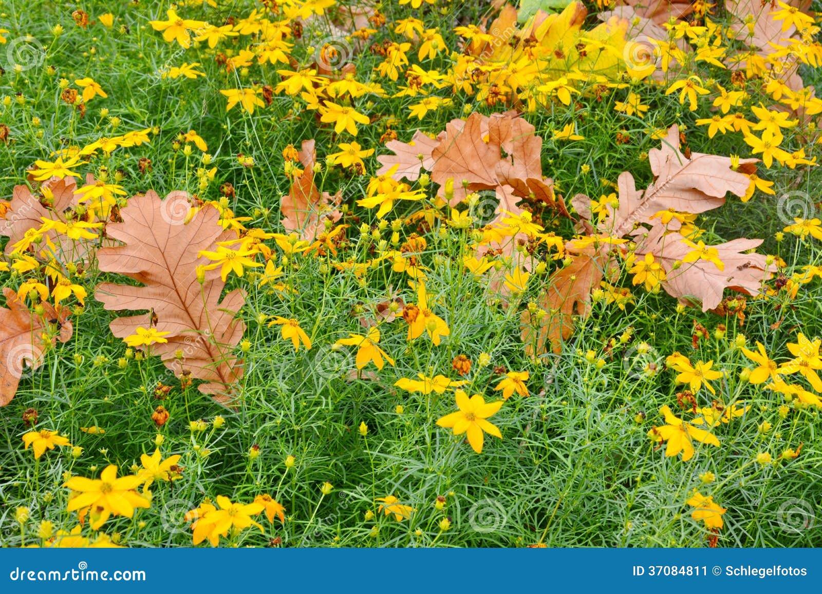 Download Jesień liście na łące obraz stock. Obraz złożonej z łąka - 37084811