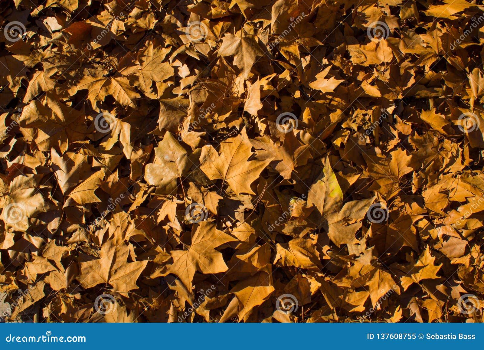 Jesień liście spadać na podłodze Madryt