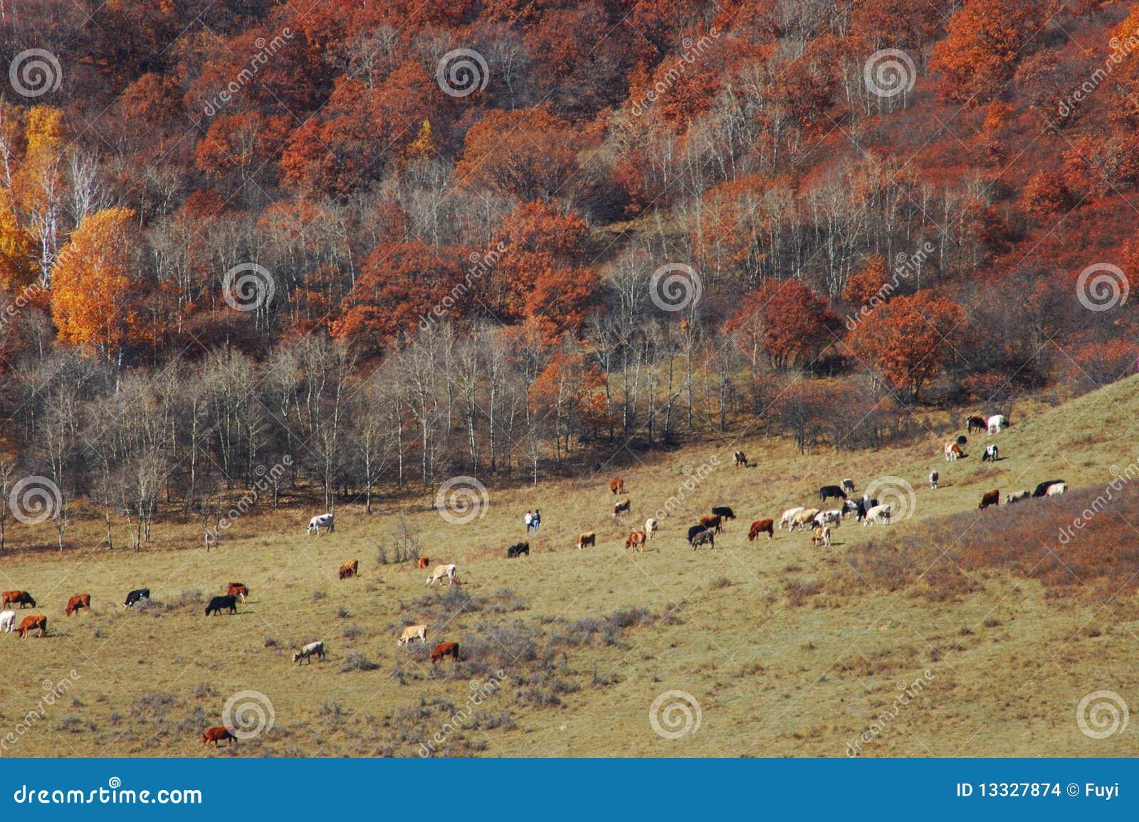 Jesień obszar trawiasty
