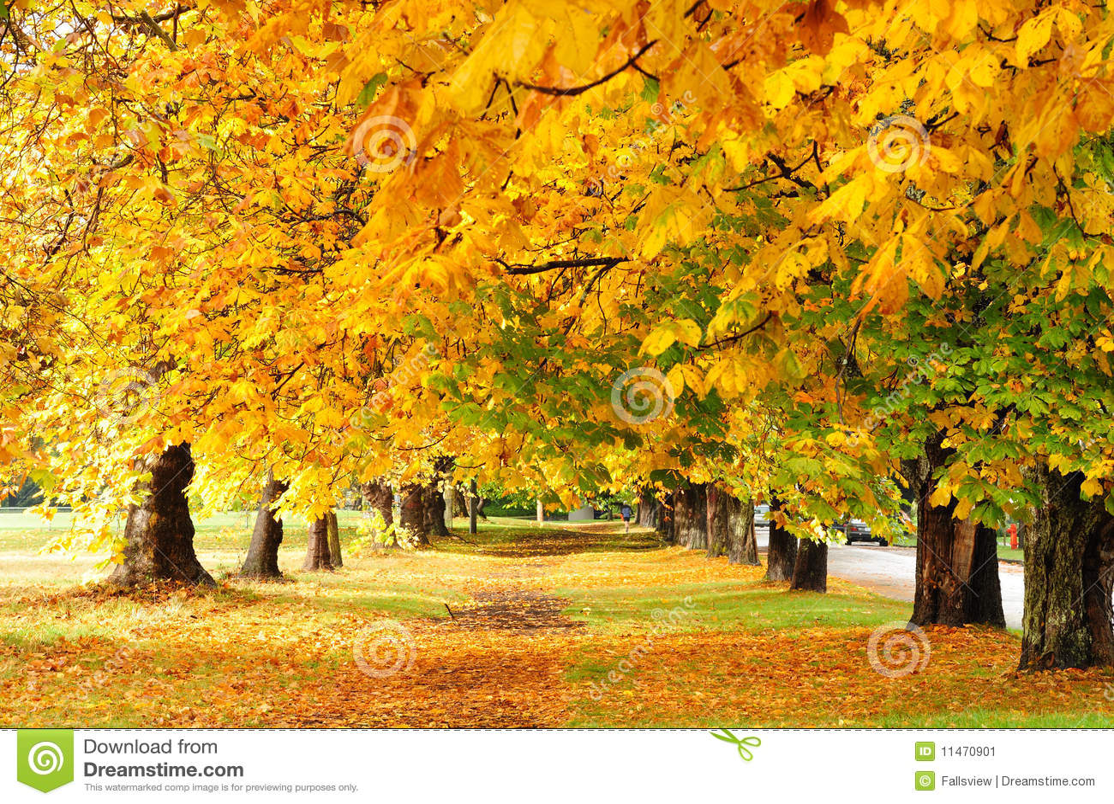 Jesień parka ślad