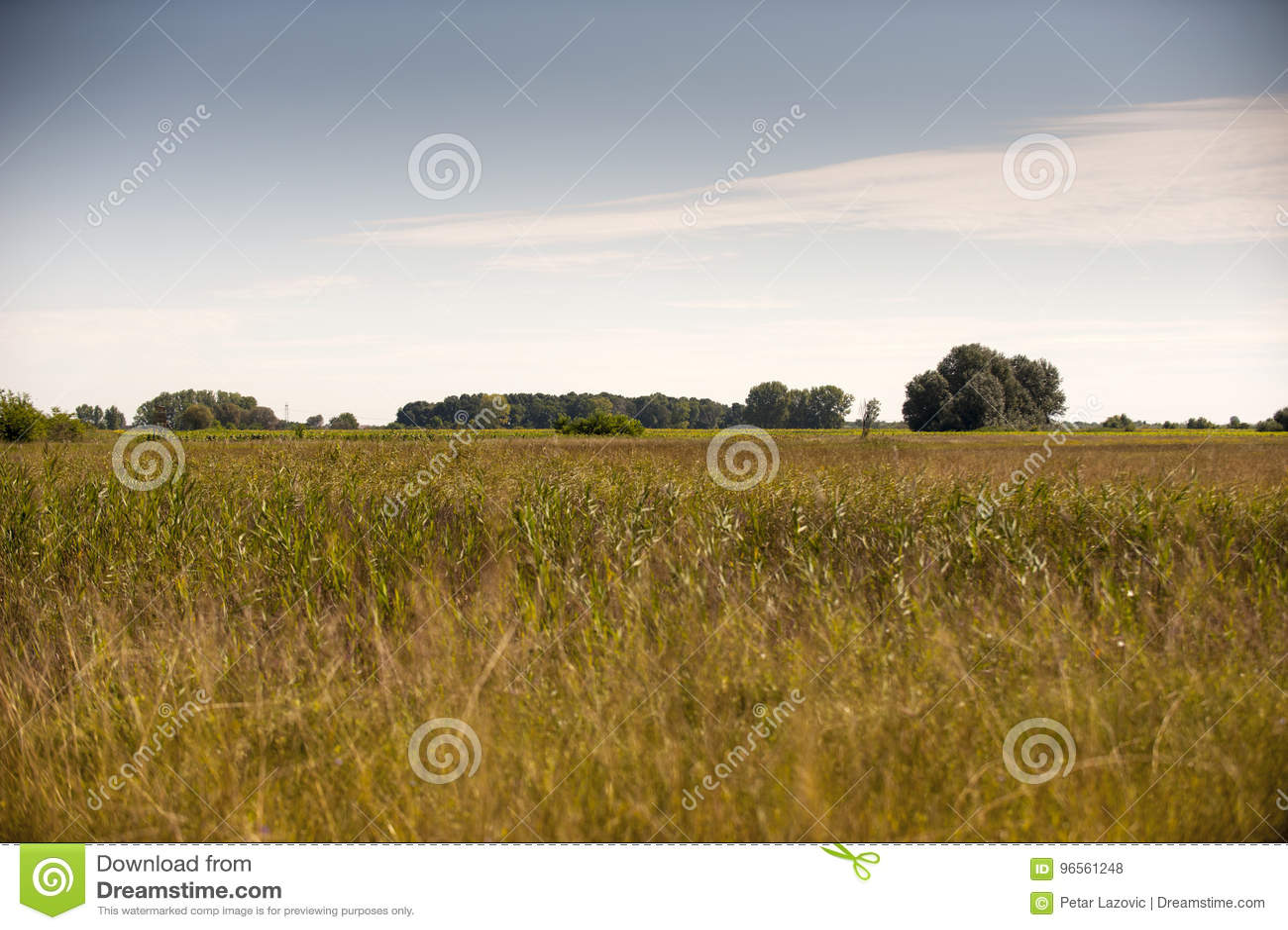 Jesień pole