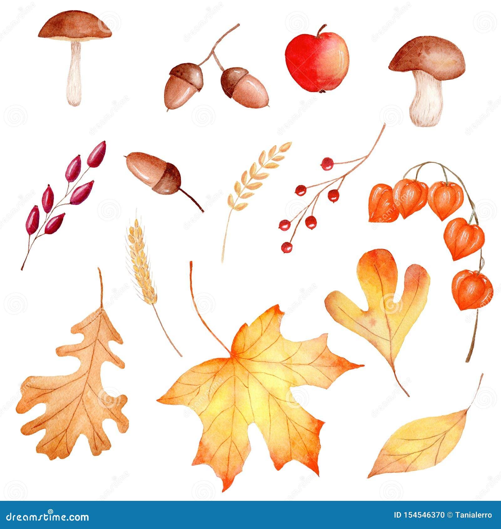 Jesień sezonu flory akwareli raster lasowe ilustracje ustawiać