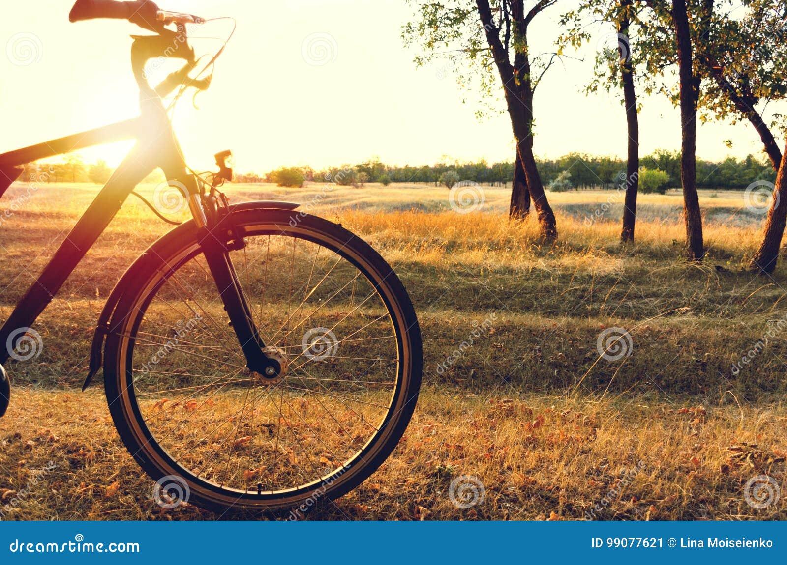 Jesień spacer na bicyklu w jesień lesie słońce błyszczy przez bicyklu