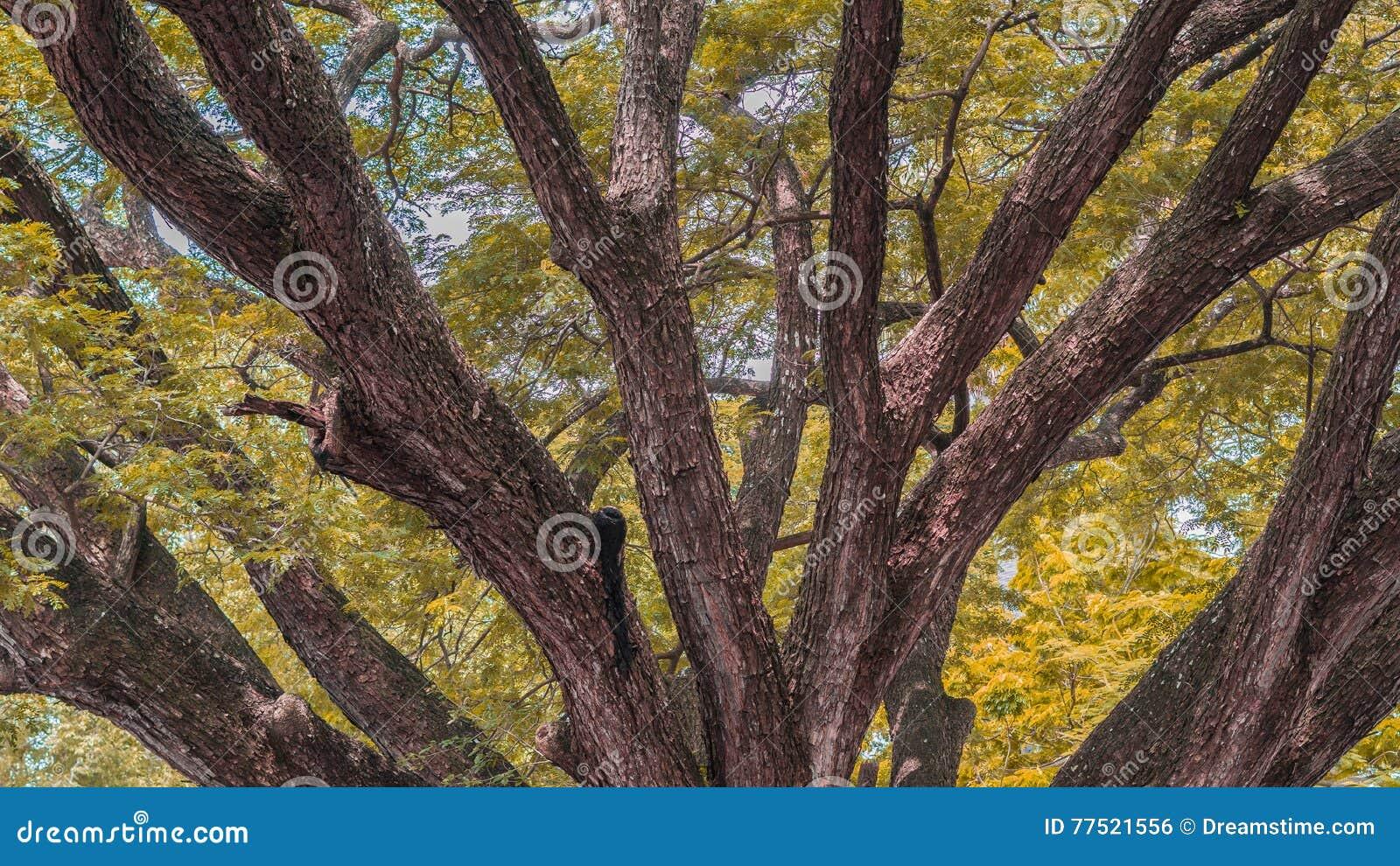 Jesień spadek lasowej ścieżki sezon