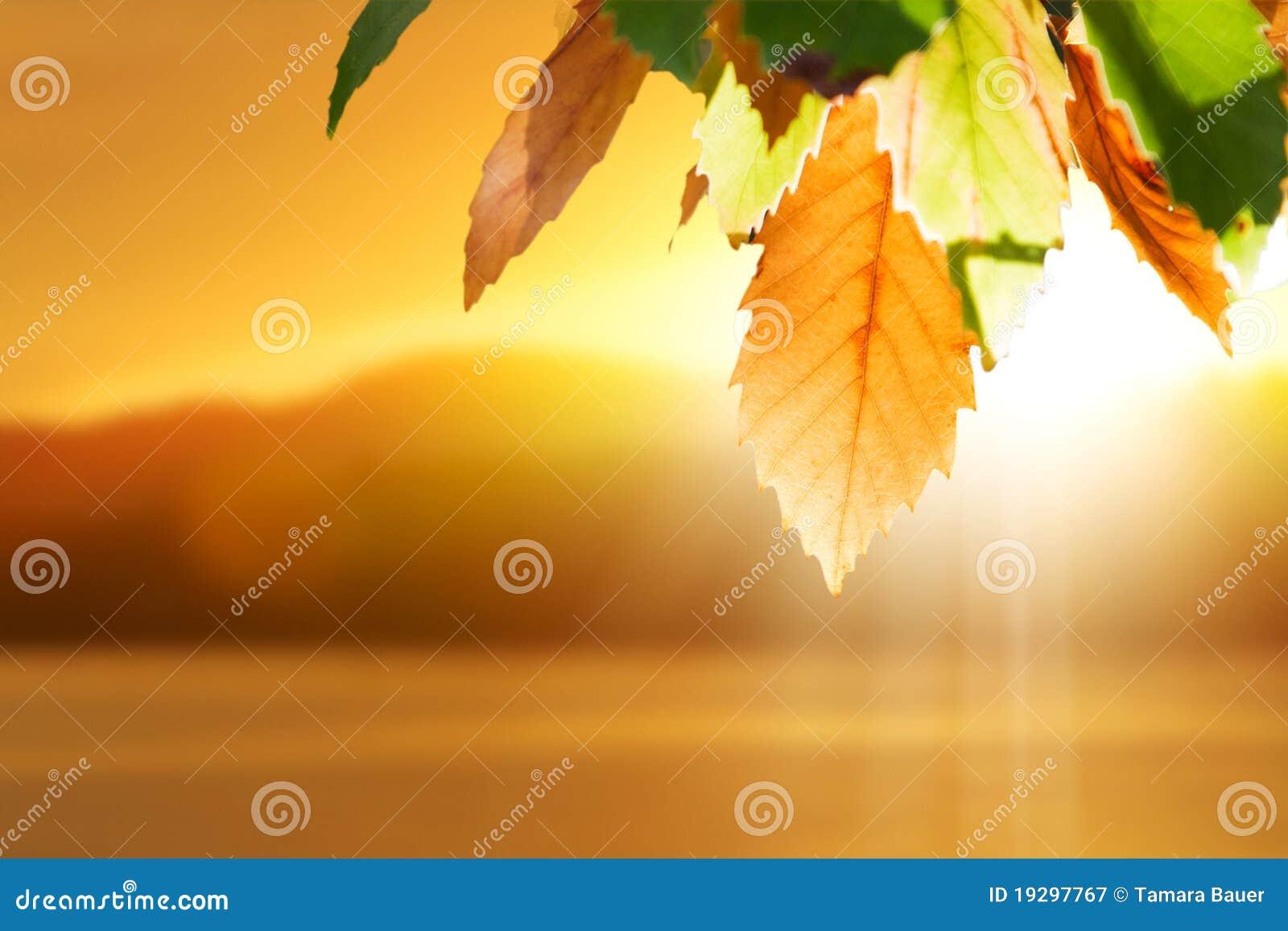 Jesień spadek liść