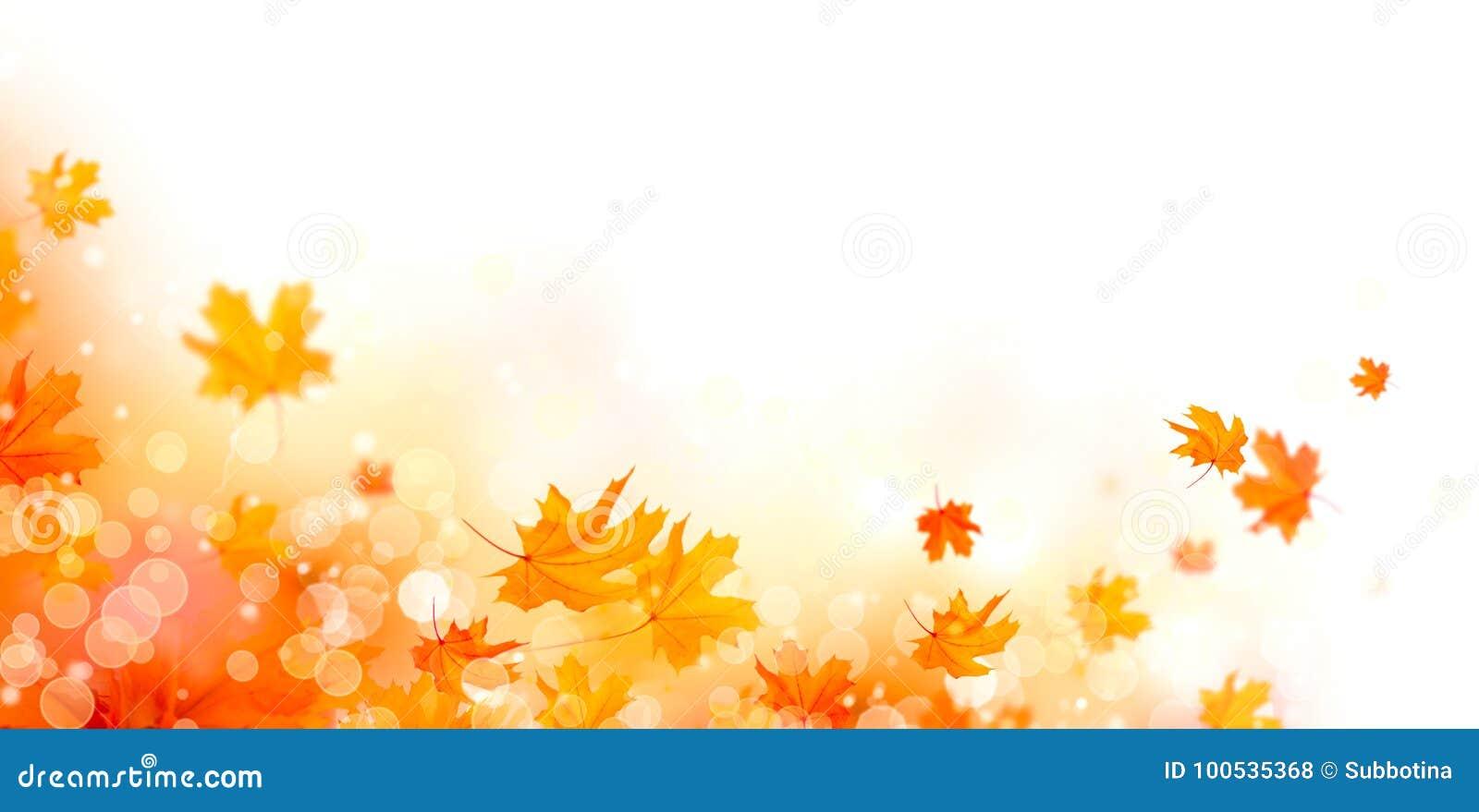 Jesień Spadku abstrakcjonistyczny tło z kolorowymi liśćmi i słońcem migocze