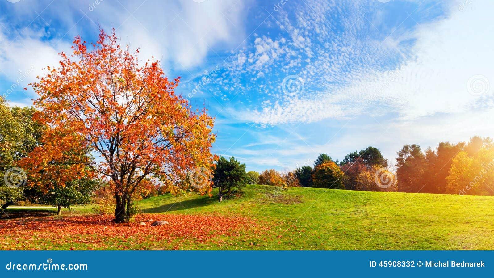 Jesień, spadku krajobraz drzewni kolorowi liść