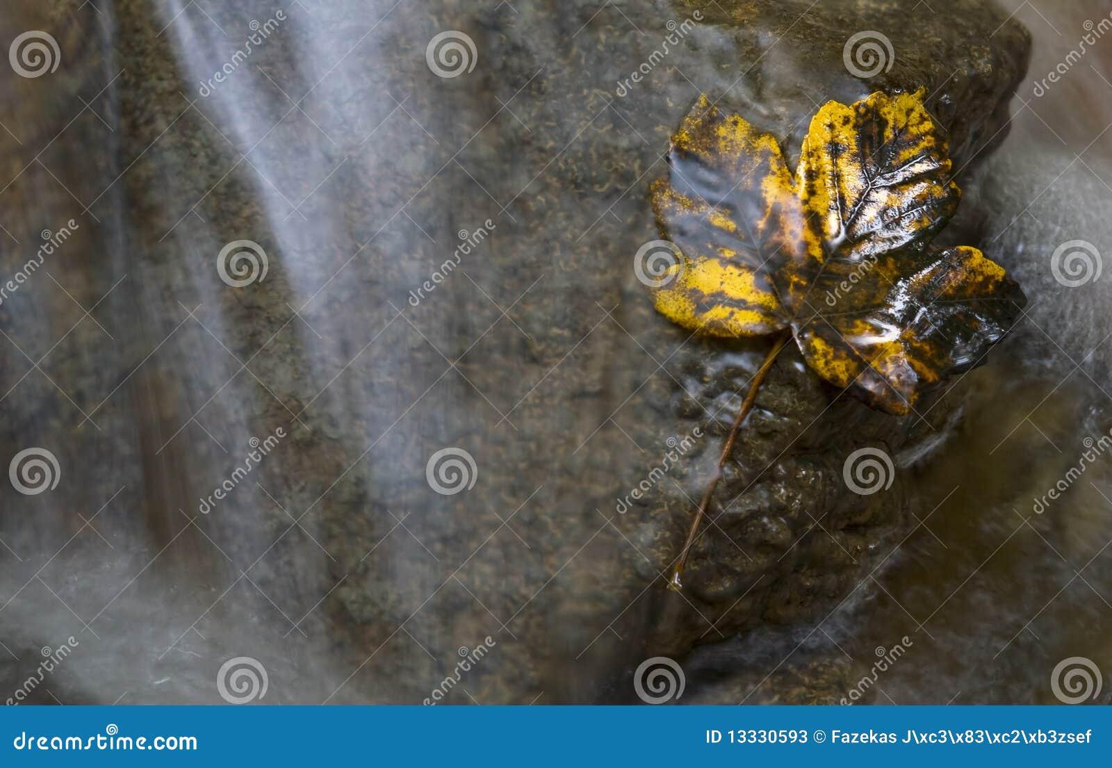 Jesień strumyka liść kolor żółty