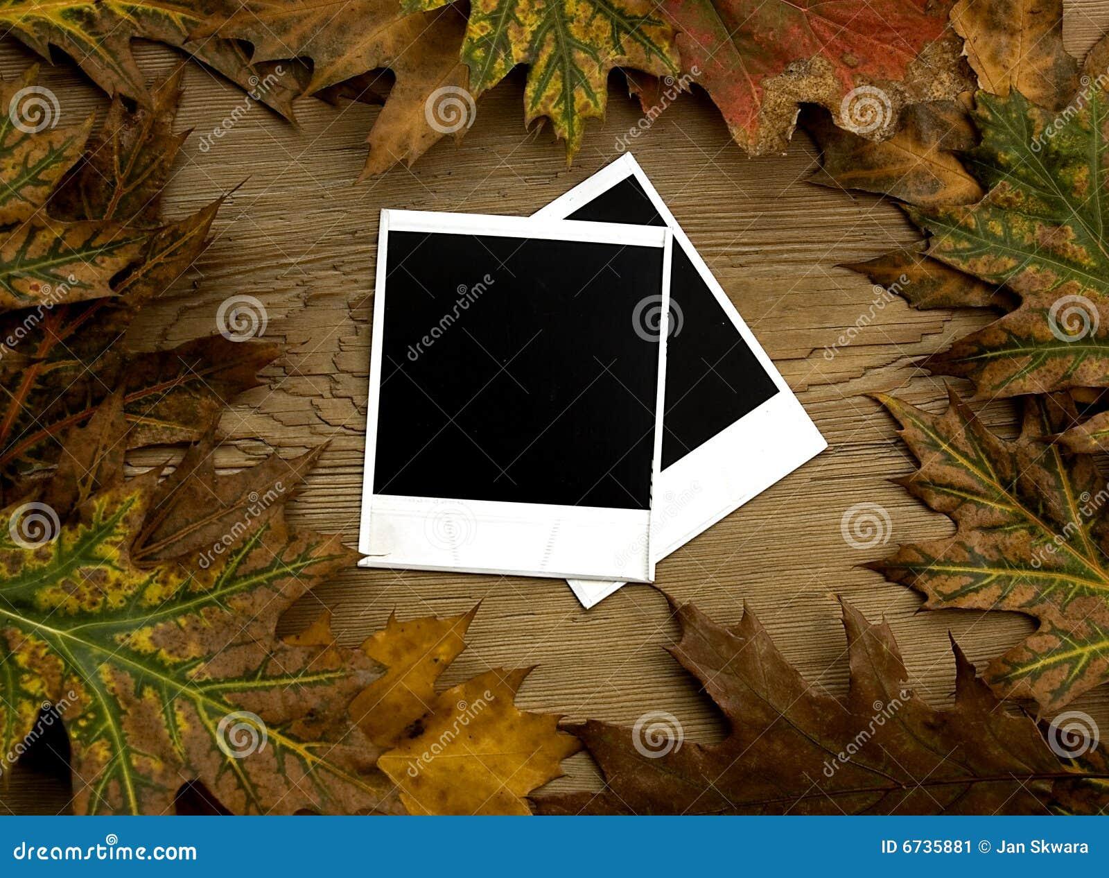 Jesień tła ramy nad polaroidem