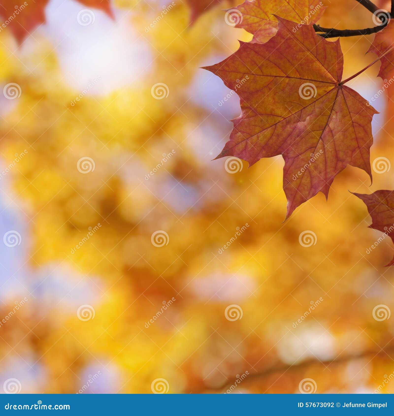 Jesień tło kolor żółty gałęziastych jaskrawy kolorów złoty liść opuszczać klonowego pomarańczowej czerwieni słońca drzewa kolor ż