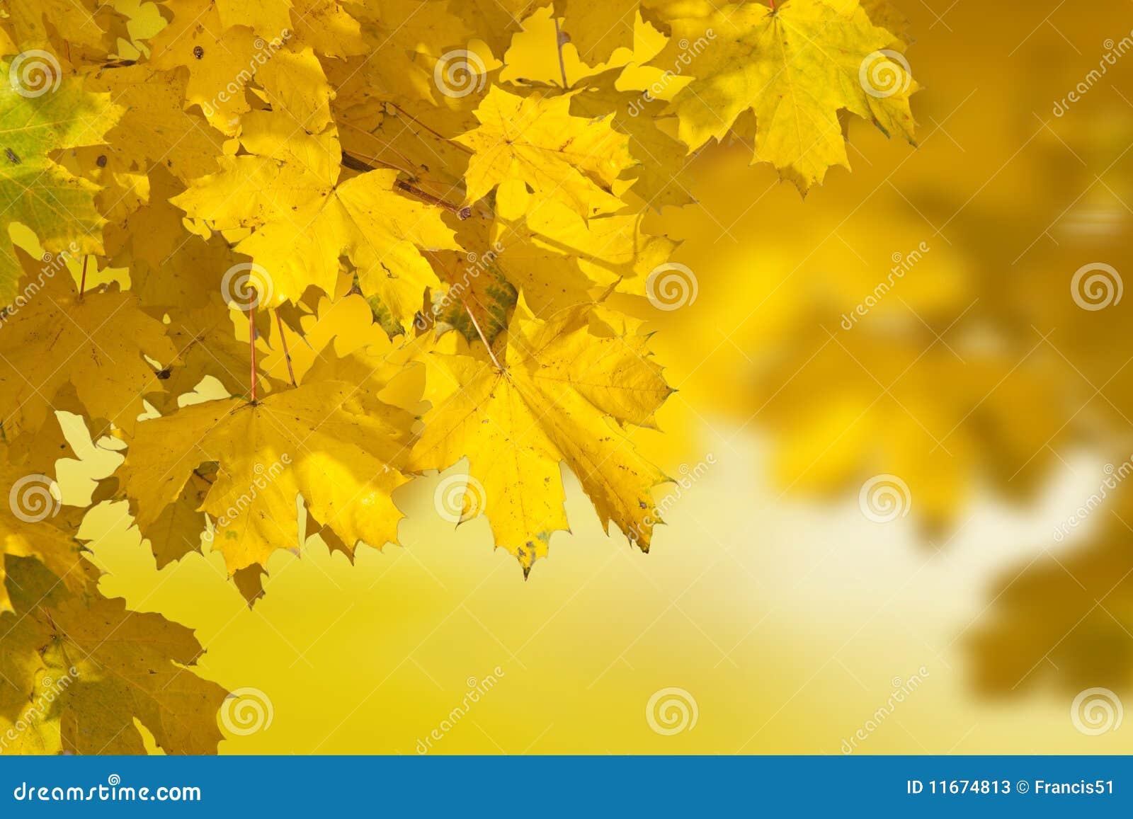 Jesień tylny liść światło