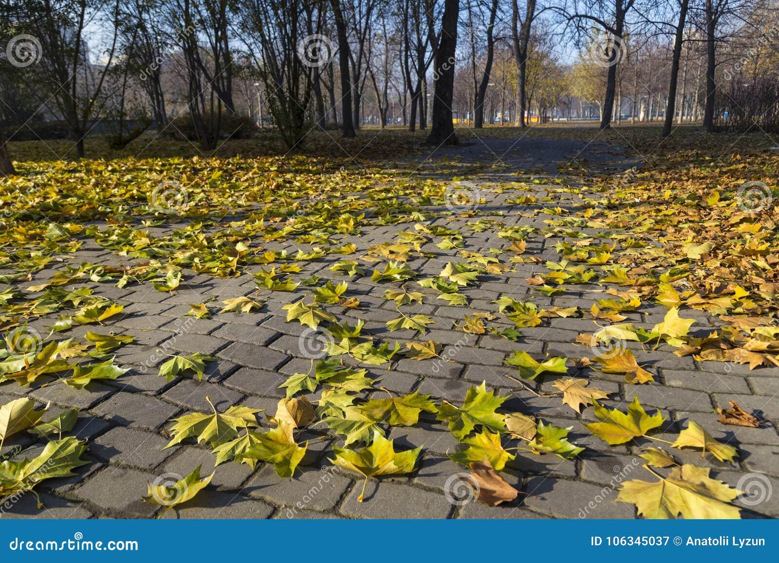 Jesień w miasto parku