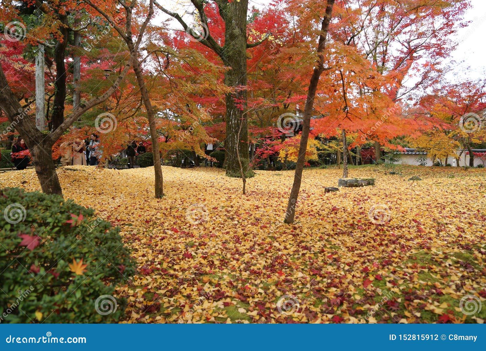 Jesień w parku w Japonia