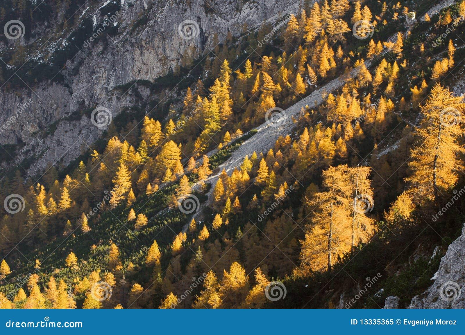 Jesień złoty barwiony lasowy