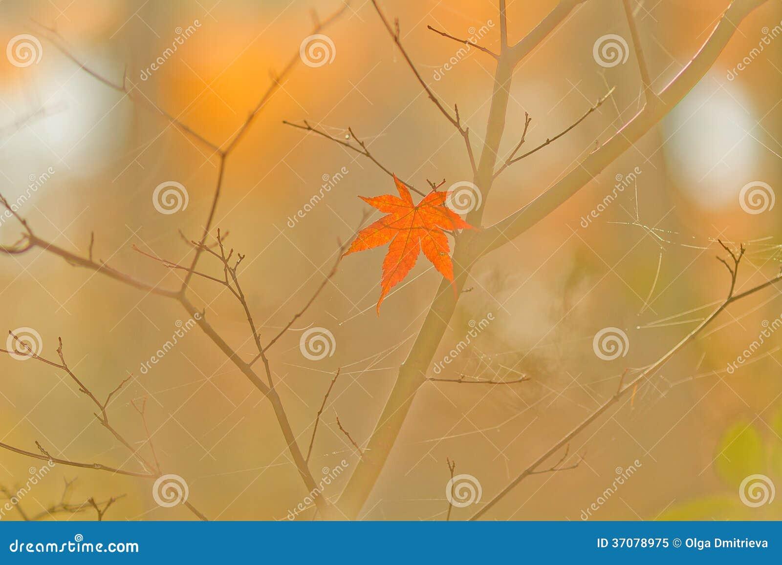 Download Jesień las. obraz stock. Obraz złożonej z piękny, sezonowy - 37078975