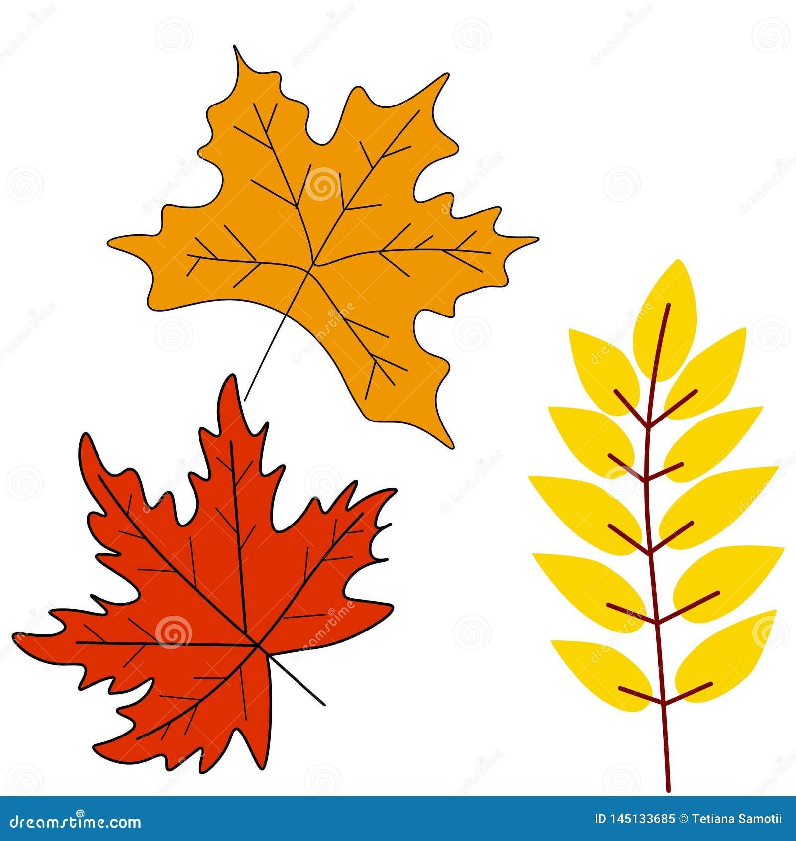 Jesie? li?ci lub spadku ulistnienia ikony Wektor odizolowywa? set klon, d?b, brzoza lub rowan drzewa li??,
