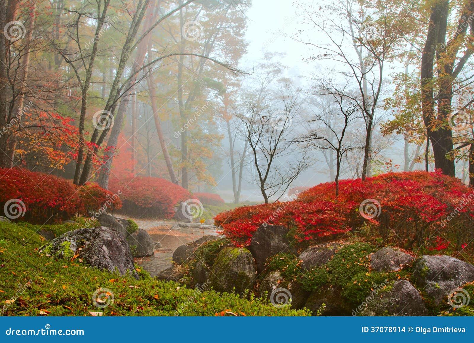 Download Jesień, mglisty krajobraz. zdjęcie stock. Obraz złożonej z ghosted - 37078914
