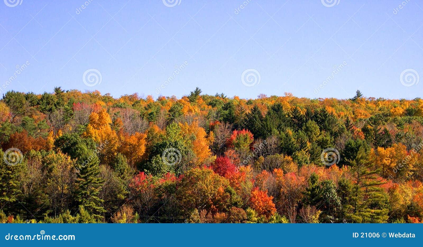Jesienią drzewa