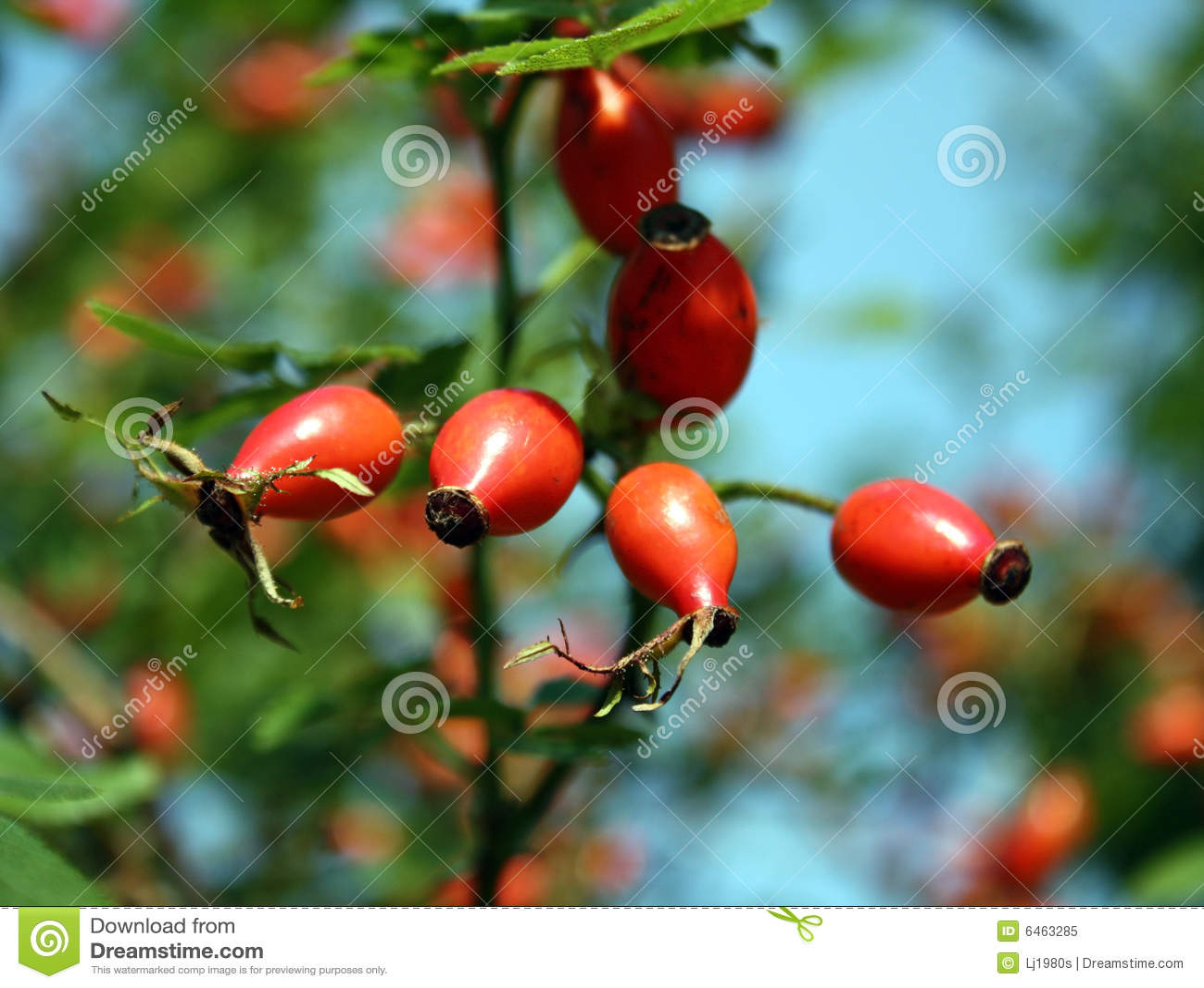Jesienią jagody