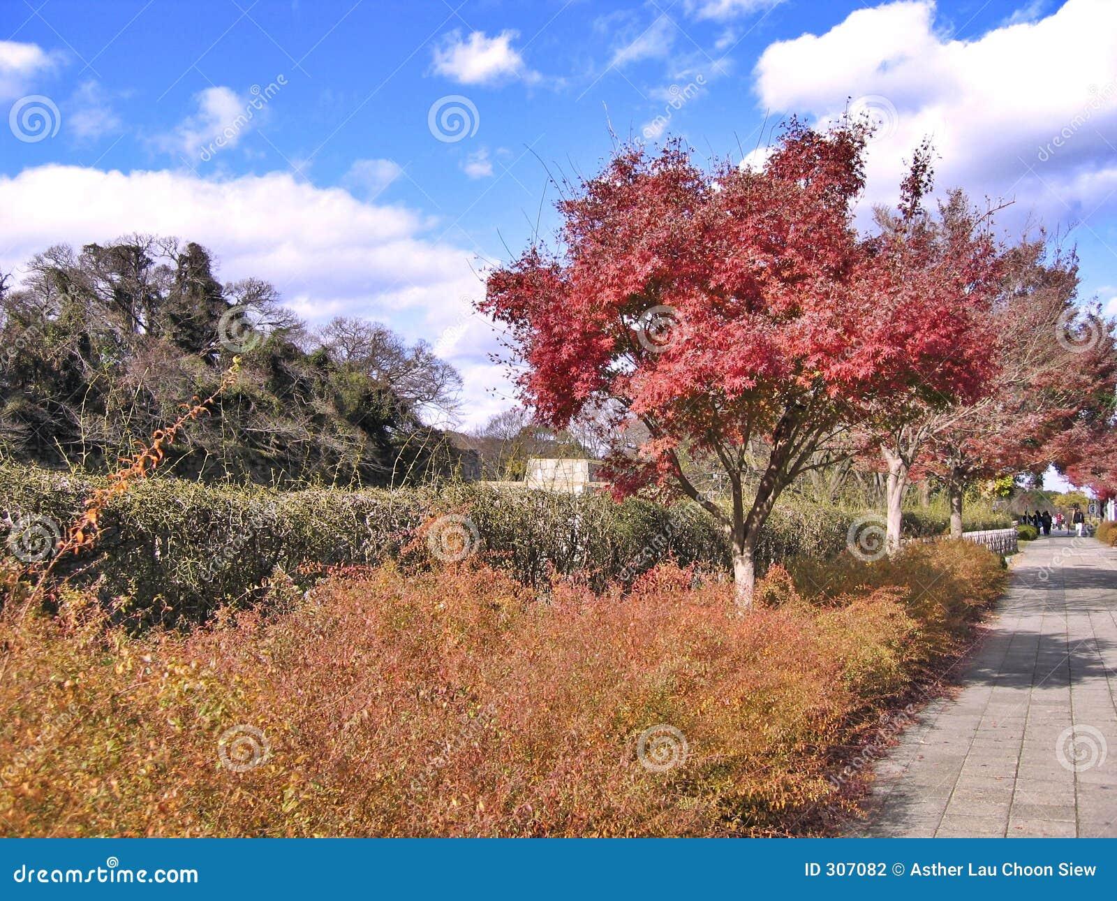 Jesienią kolor drzewa