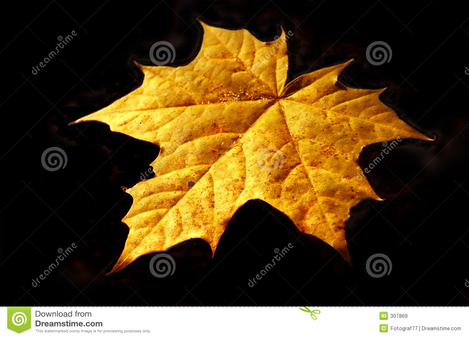 Jesienią opończy