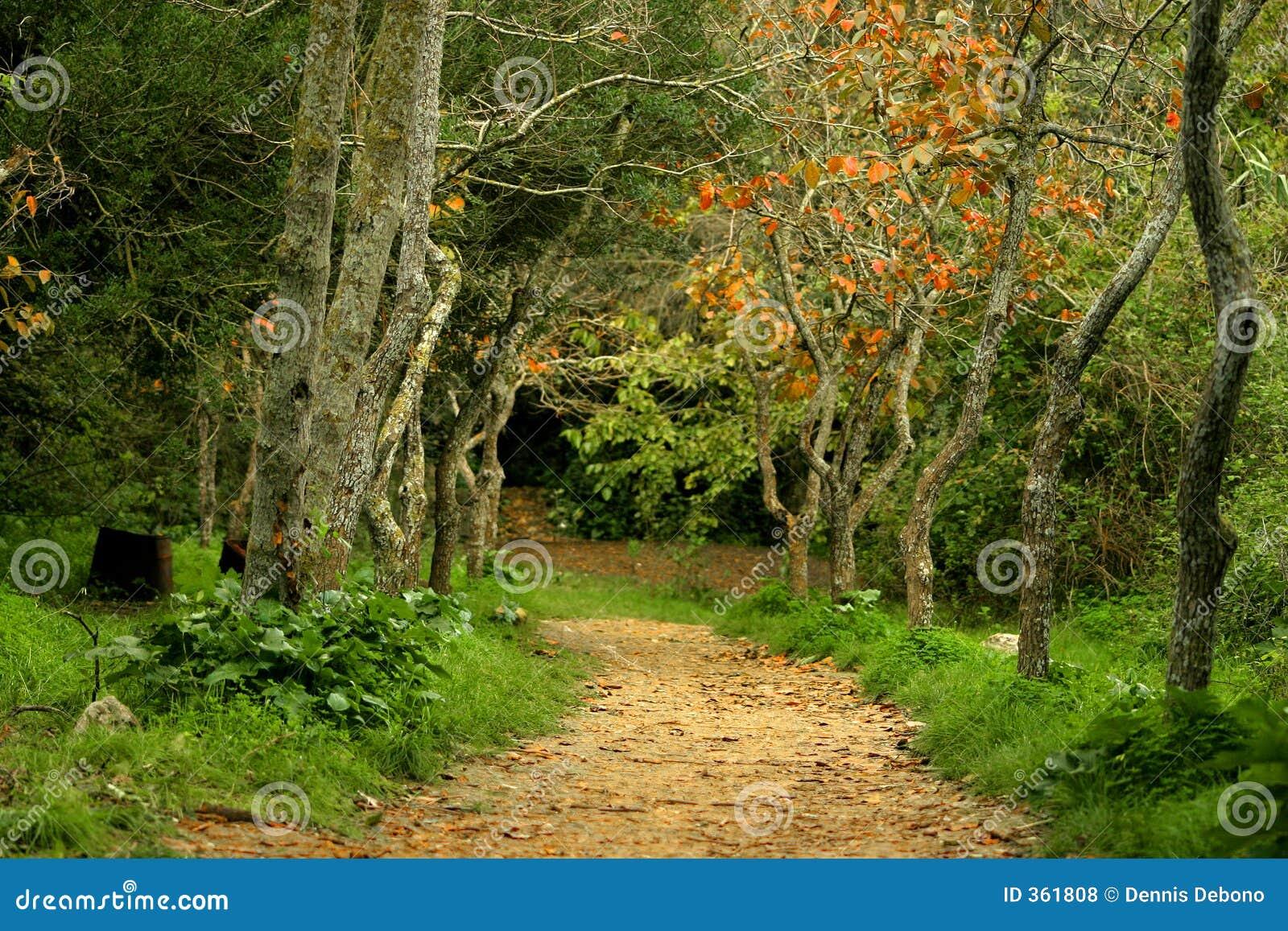 Jesienią   the pathway