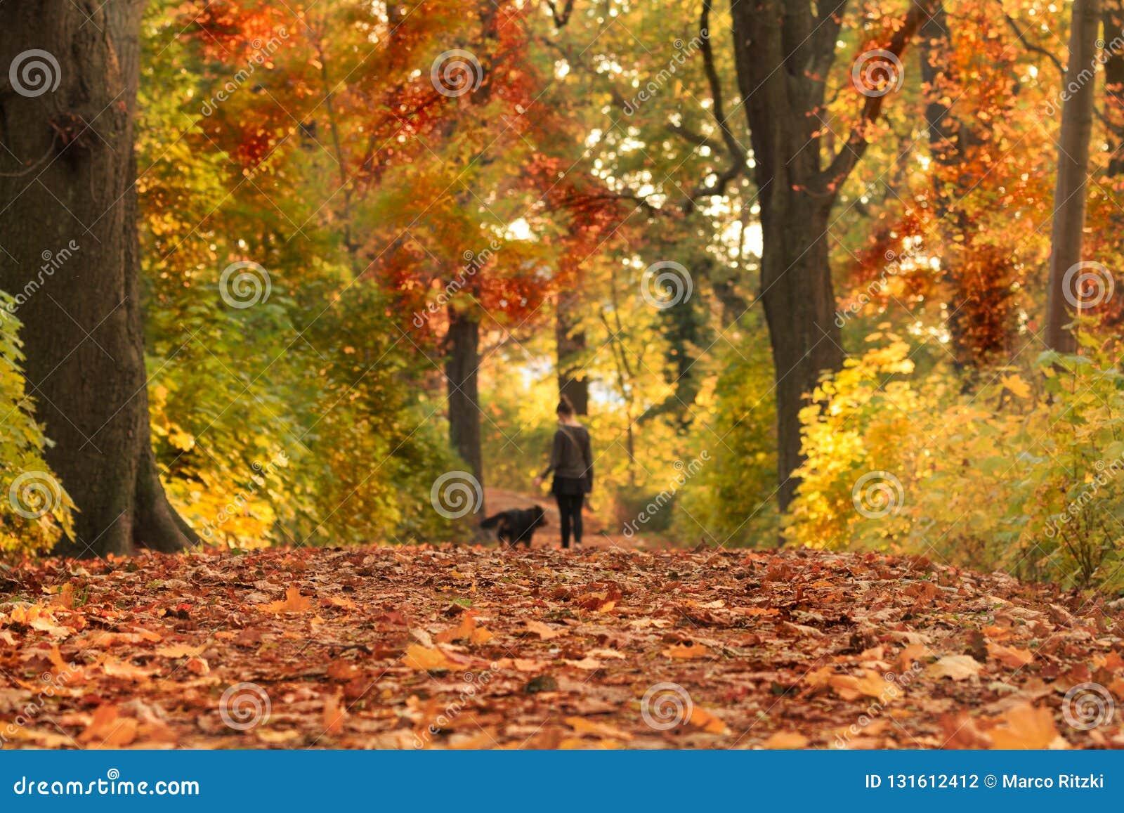 Jesieni ścieżka z barwionymi liśćmi
