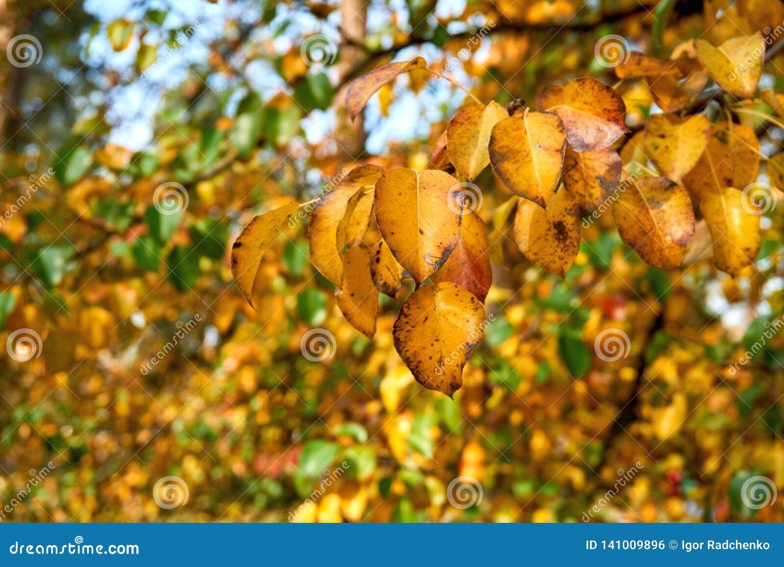 Jesieni bonkrety liście