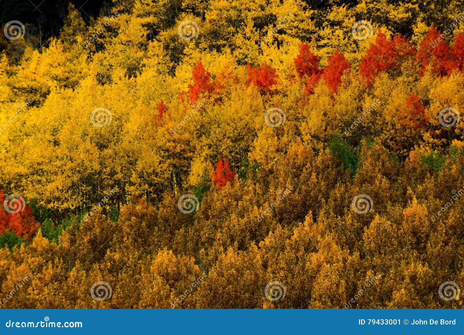 Jesieni Brushwork