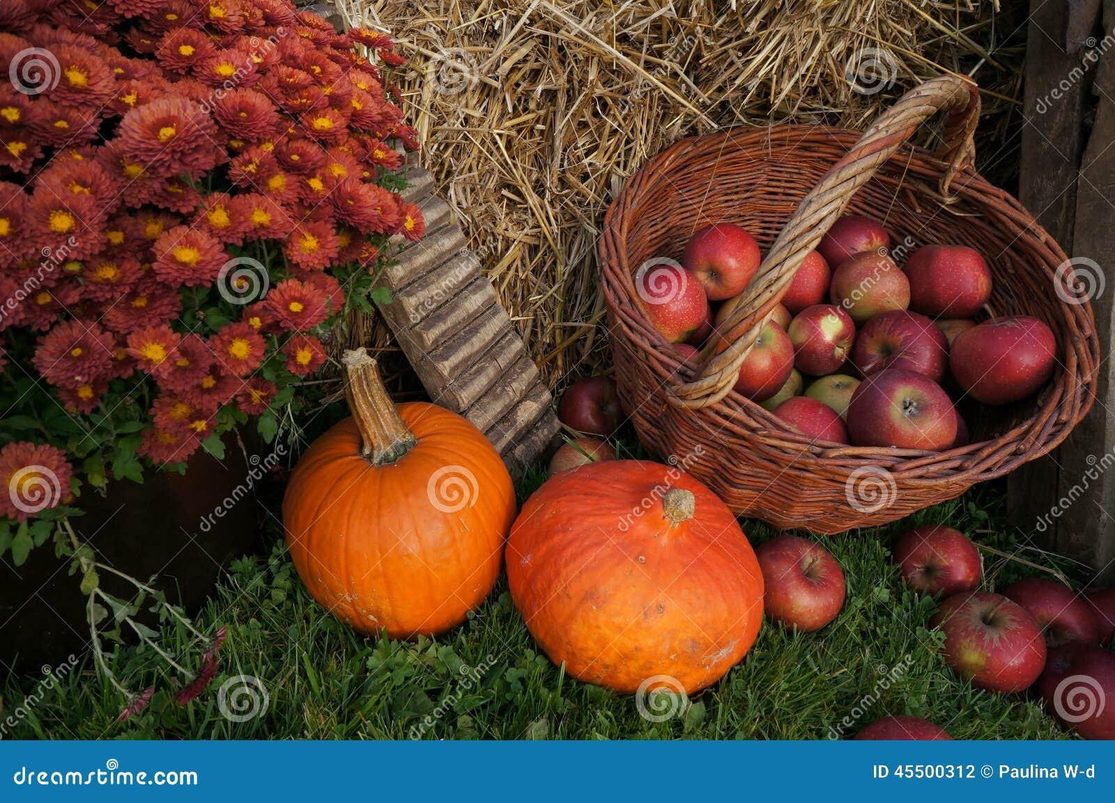 Jesieni dekoraci, czerwieni i zieleni jabłka w łozinowym koszu na słomie, banie, kabaczek, wrzos kwitną i chryzantema kwitnie