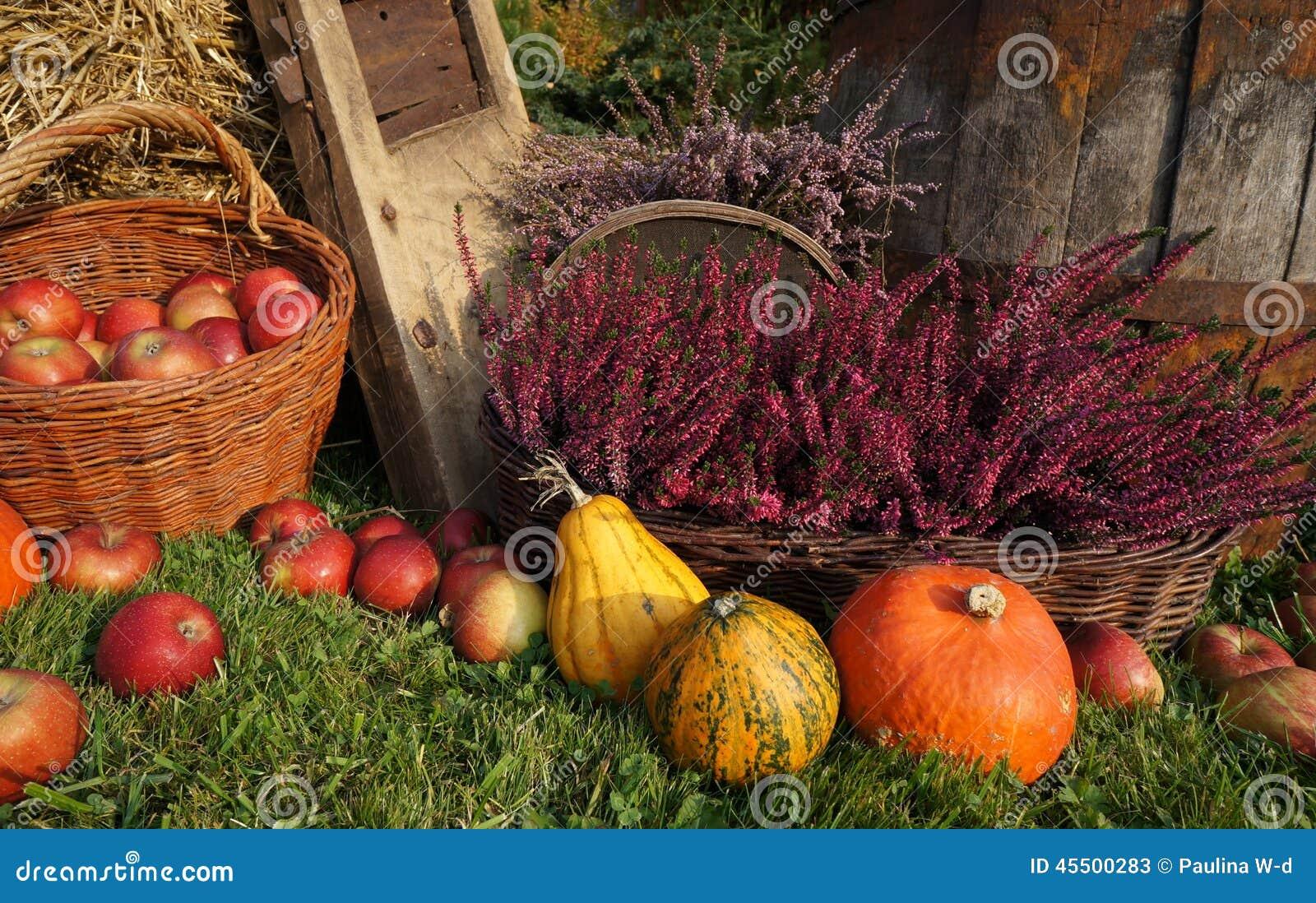 Jesieni dekoracja, banie, kabaczek, wrzosów kwiaty i łozinowy kosz z jabłkami,