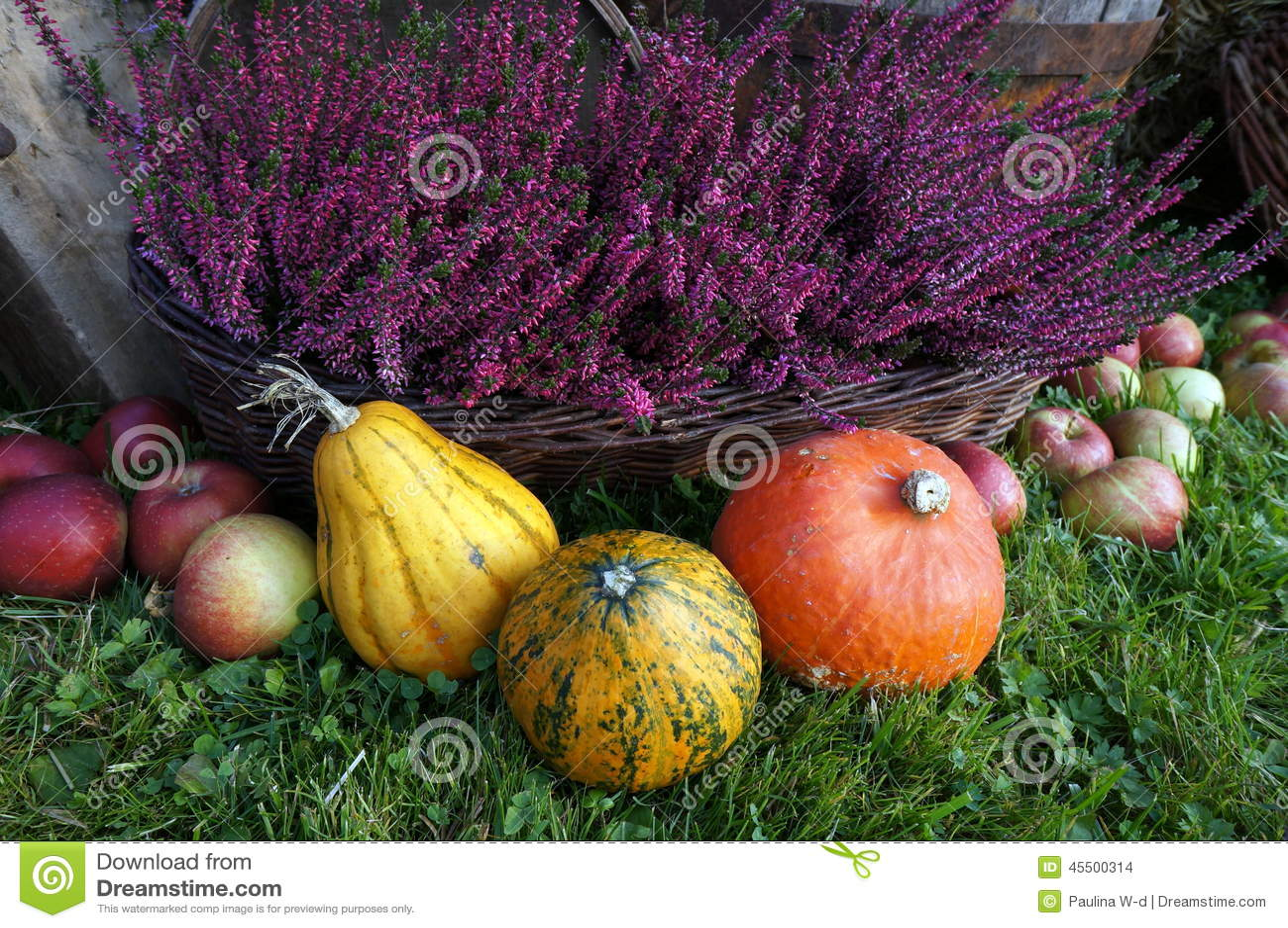 Jesieni dekoracja, banie, kabaczek, wrzosów kwiaty i jabłka,