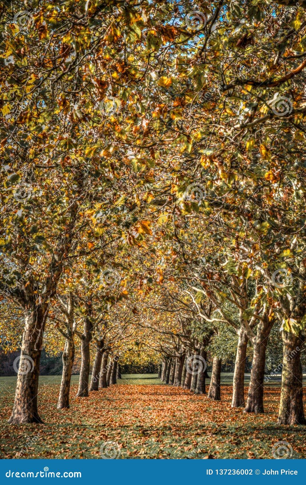 Jesieni drzew zbieżna abstrakcjonistyczna sztuka