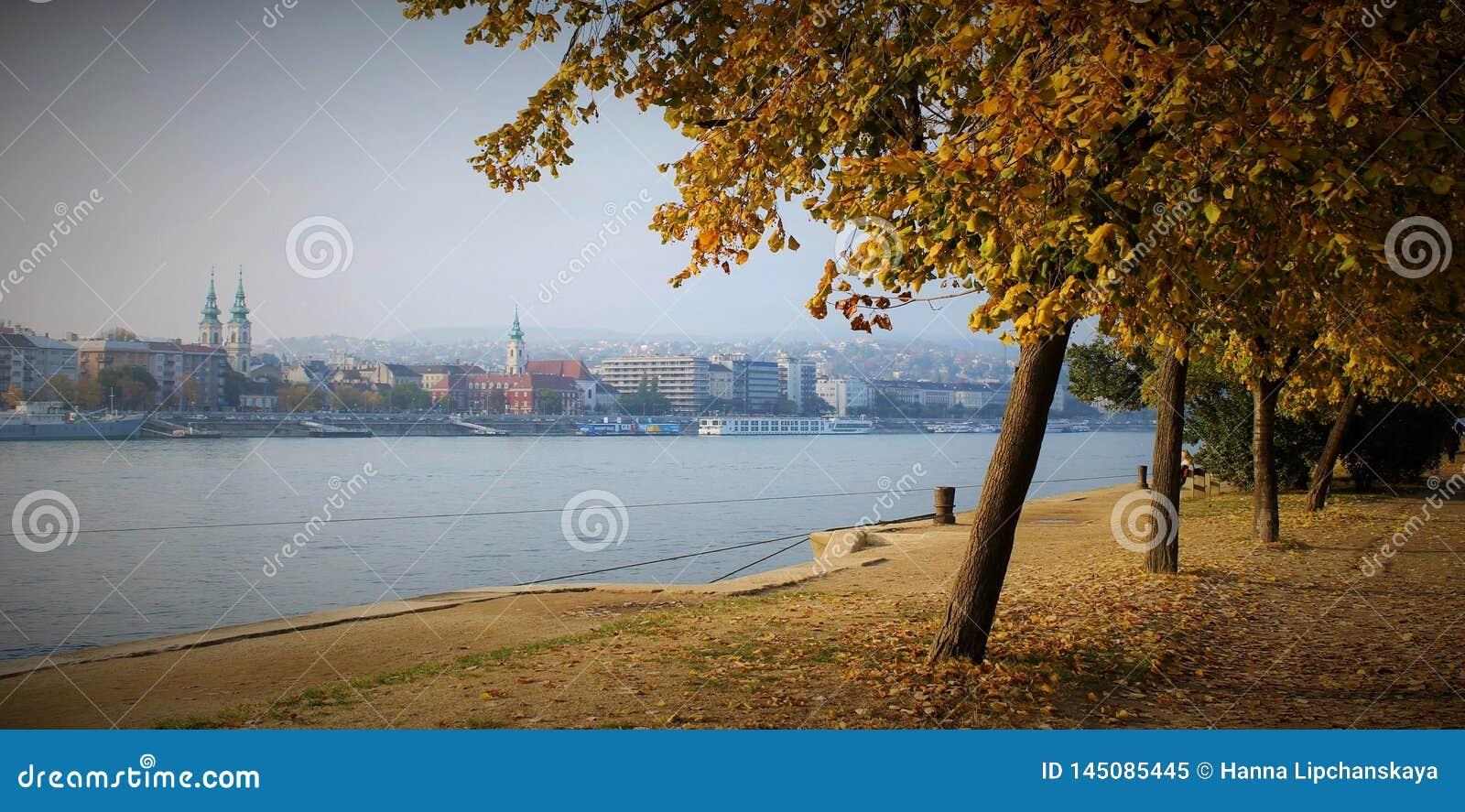 Jesieni drzewo blisko Danube rzeki
