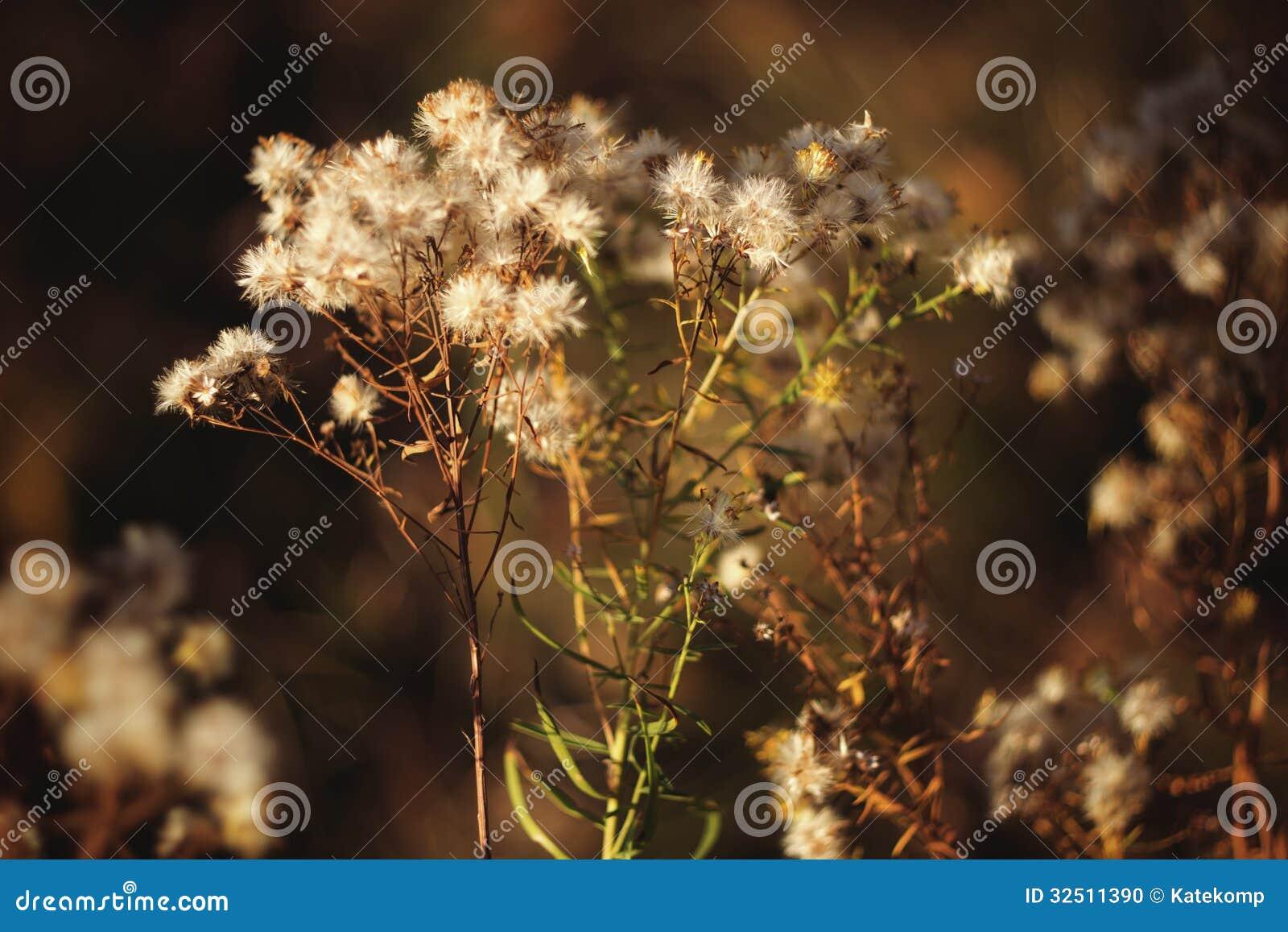 Jesieni fotografia ładni rośliien prickles