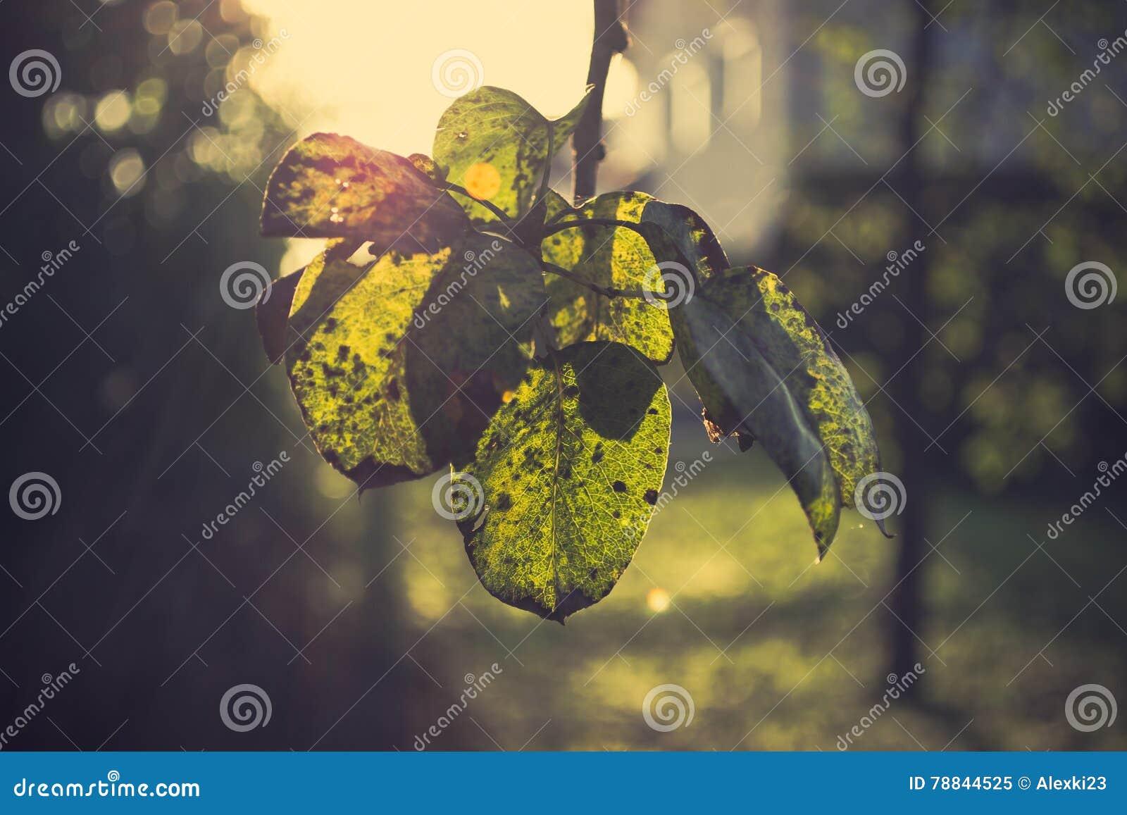 Jesieni gałązki