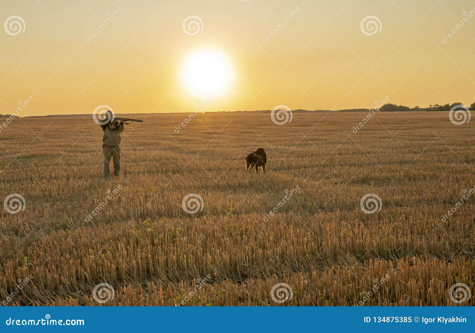Jesieni polowanie dla śródpolnej gry z psem przy zmierzchem