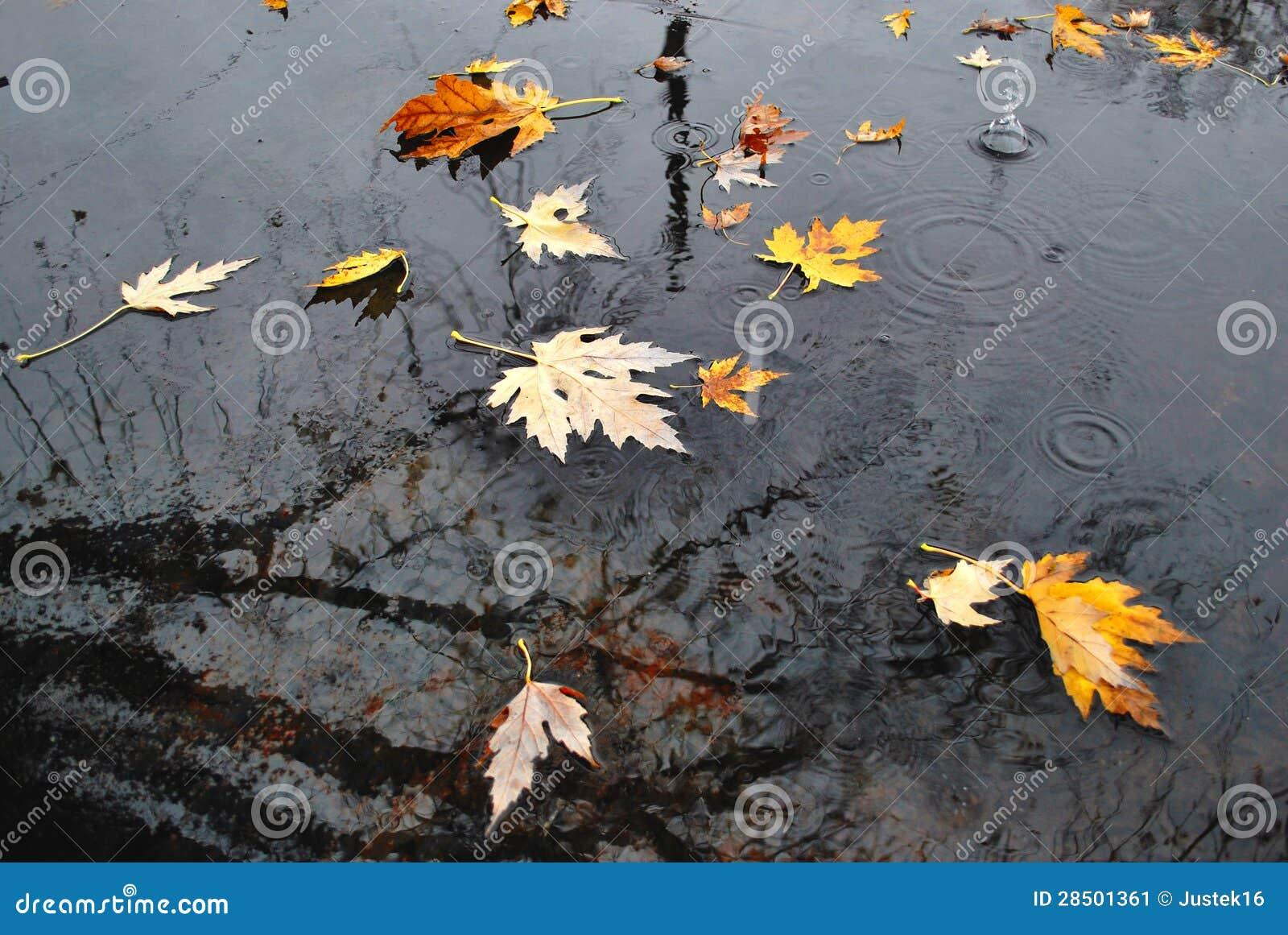 Jesieni ulewa