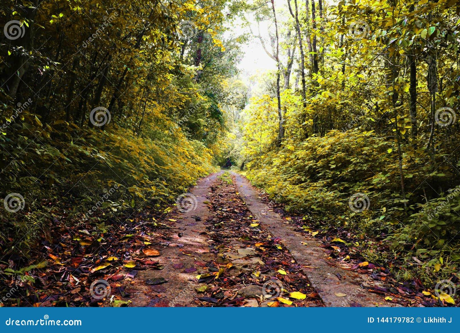 Jesieni ulistnienie rezerwowy las