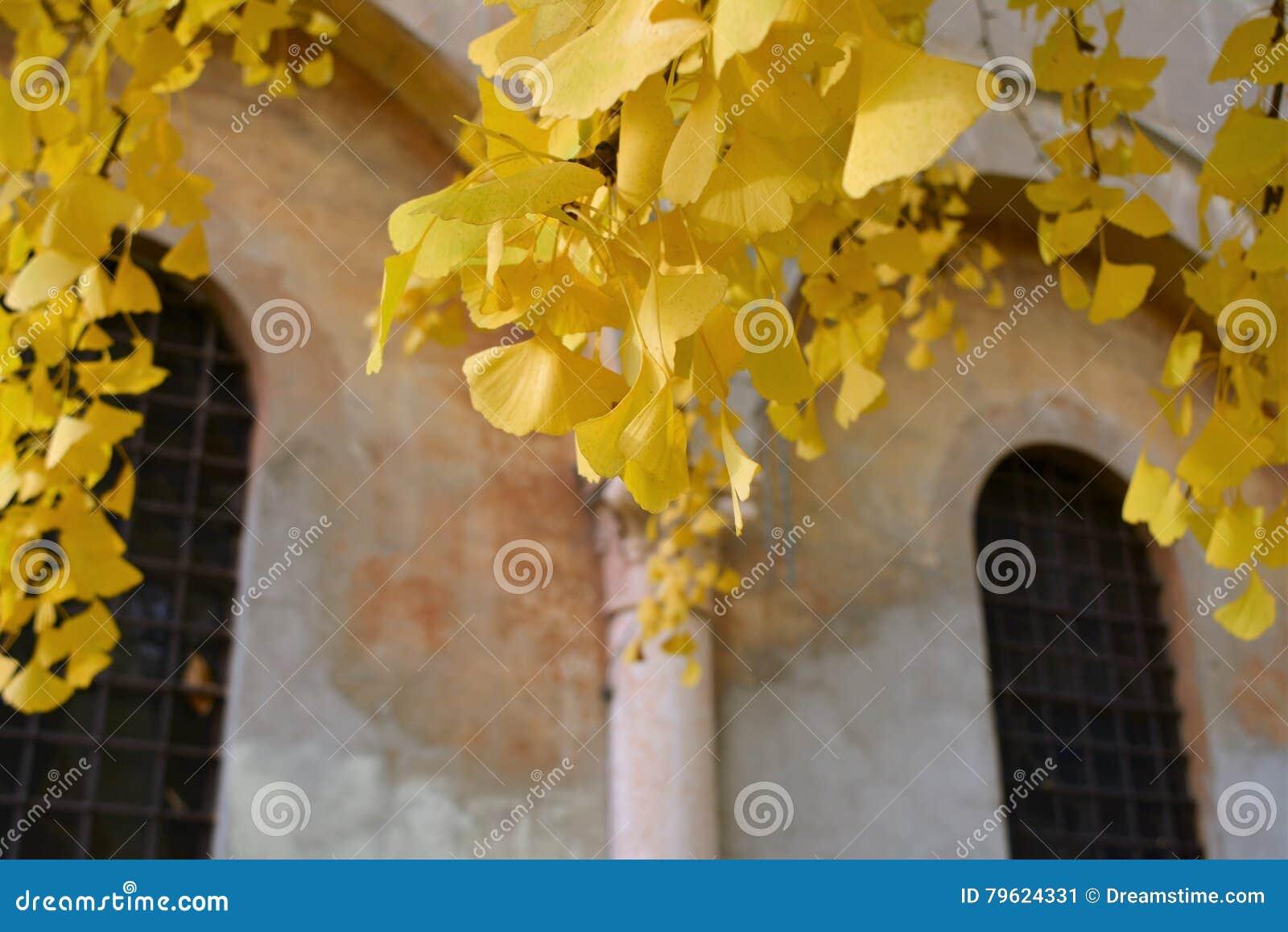 Jesienny dzień opuszczać melancholicznego kolor żółty