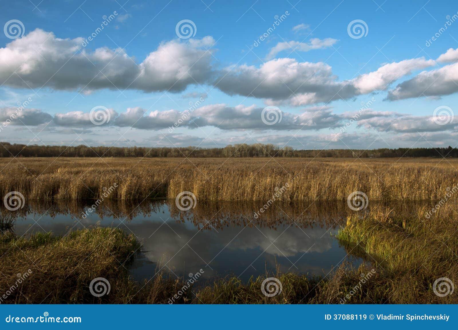Download Jesienny dzień obraz stock. Obraz złożonej z jesienny - 37088119