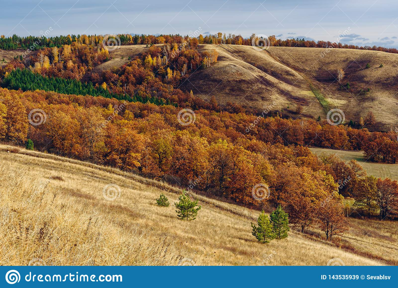 Jesienny las na zboczu