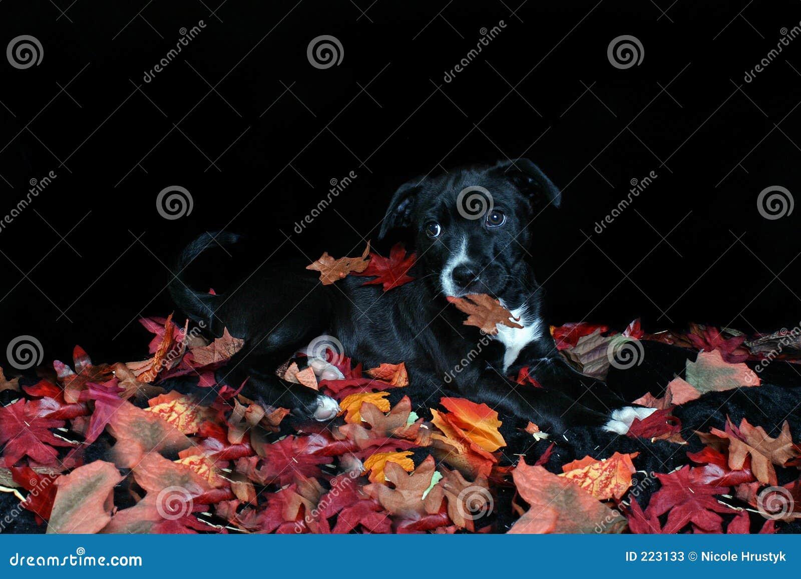 Jesienny pies liście